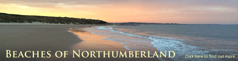 best beaches in the UK best beaches in northumberland dog friendly beaches in northumberland