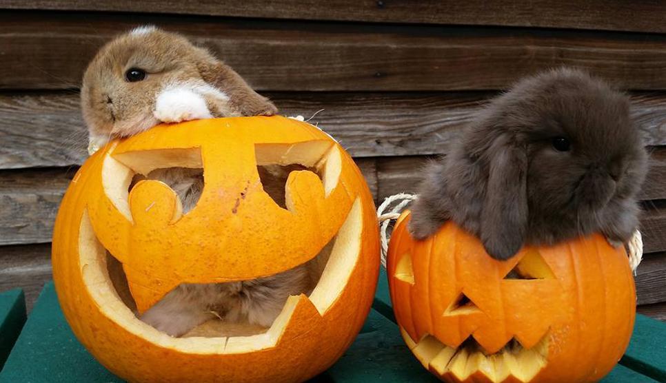 Halloween at Whitehouse Farm