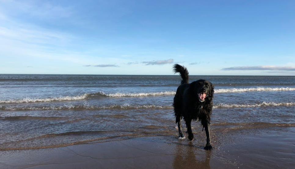 Dog on Northumberland beach