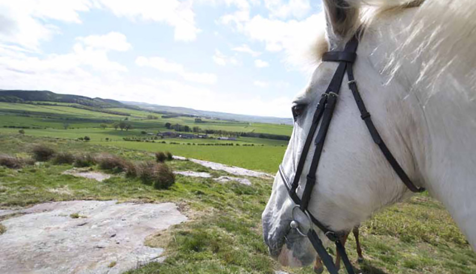 Horse riding in Northumberland